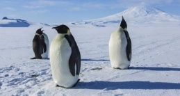 AntarticaAYearOnIce_Pic4