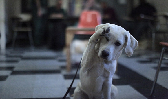 prisondogs_dogsalute