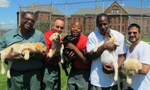prisondogs_img