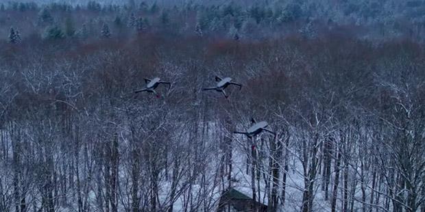 EnhancedMovie-wintry-scene